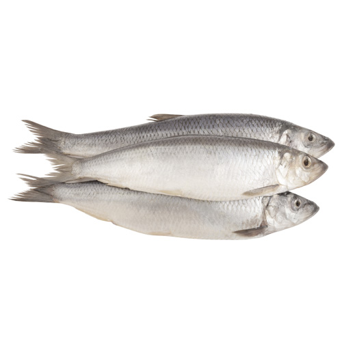 Herring paddys for Is a fish wet