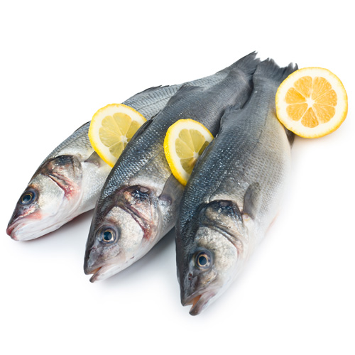 Seabass paddys for Is a fish wet