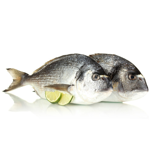 Seabream paddys for Is a fish wet