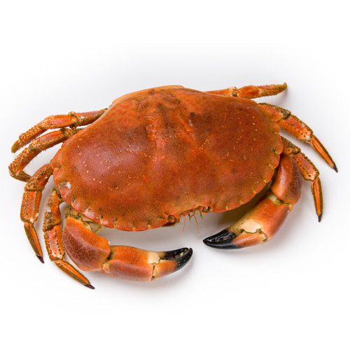 Crab Cooked Whole cooked crab
