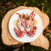 Manx Lobster - Whole Dressed