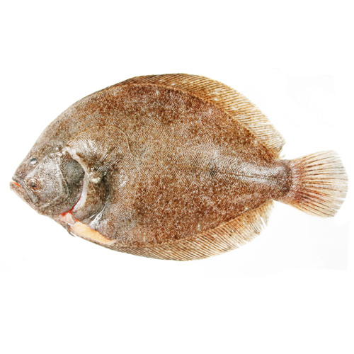 Whole wet fish paddys for Is a fish wet