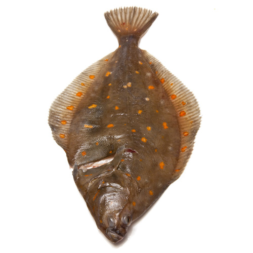 Plaice paddys for Is a fish wet